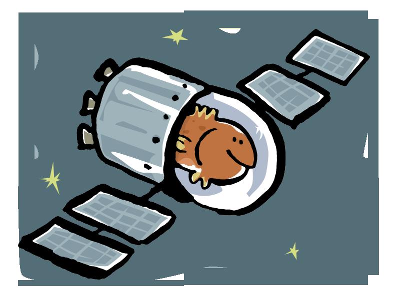 Star-Fish